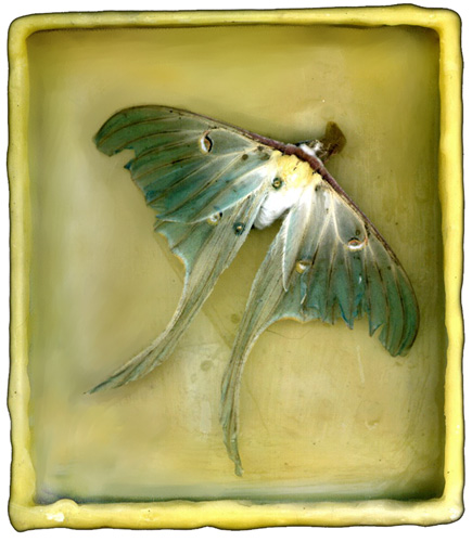 Mt. Tremper Luna Moth in Beeswax Box, artwork and photo by Jane Sherry