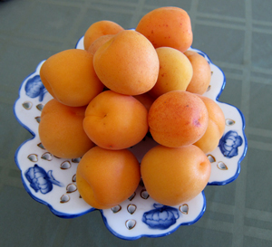 apricots a sattvic food
