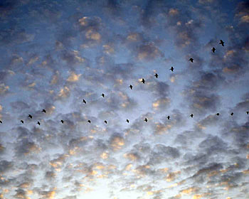 Birds Flying in Formation, photo by Jane Sherry