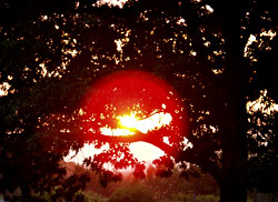 Sun Through Branches on Roxbury Road, photo by Jane Sherry