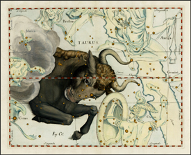 The Constellation Taurus, by Hevelius